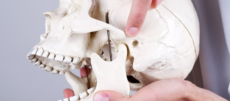 Demonstrating Jaw Pain/TMJ on a Skull